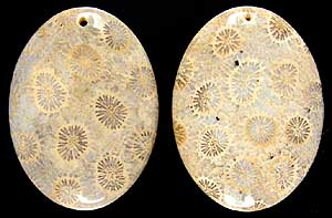 Fossil coral pendants 1 two piece parcel 1mm drilled hole mozeypictures Gallery